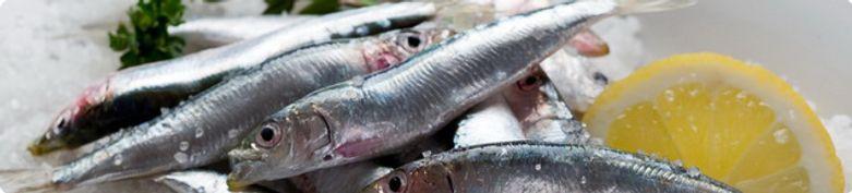 Fischgerichte - Karimo 2