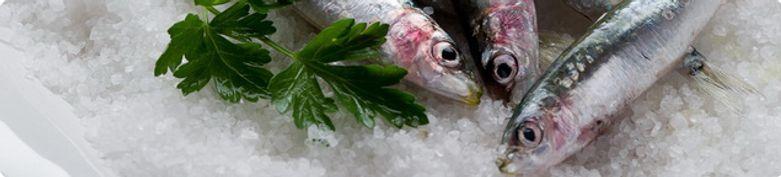 Fisch Gerichte - More & Co